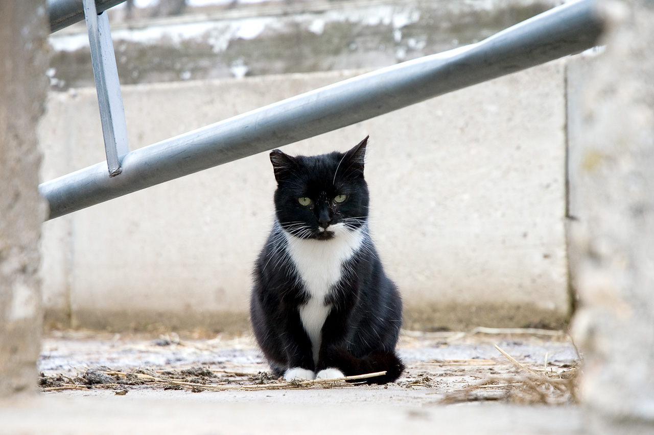 a barn cat at the riding stable author sobering geoff