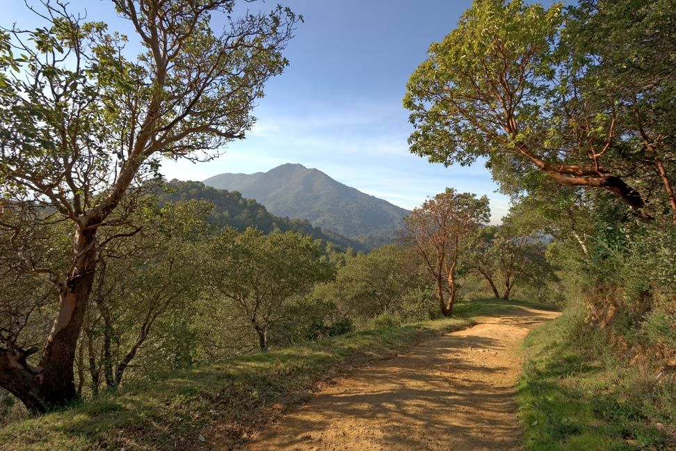 mt tamalpais through trees author bryson steve