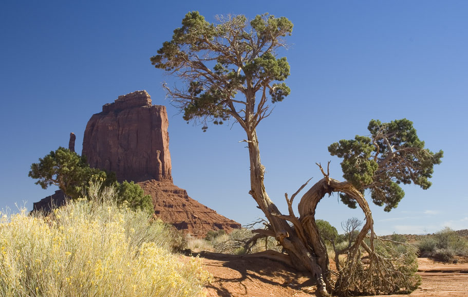 mitten and tree monument valley author bryson ste steve