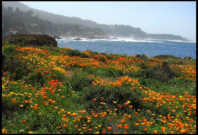 sea and wildflowers author patterson steve