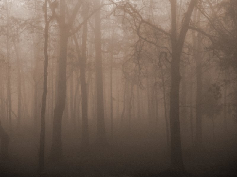 woods in fog please view on larger author kelly landrum