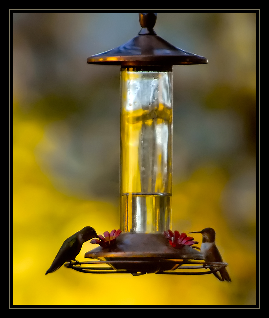 sunset at the feeder f iso author dube dave
