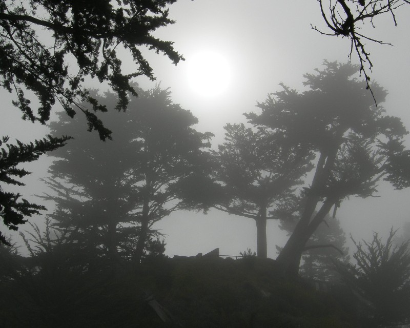 esalen trees in the fog author dreizler bob