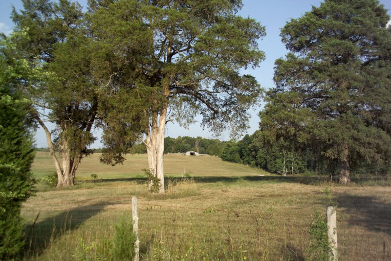 trees with barn author kelly landrum