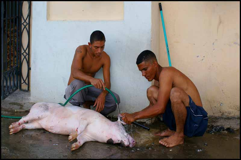 dressing a pig in havana author downs jim