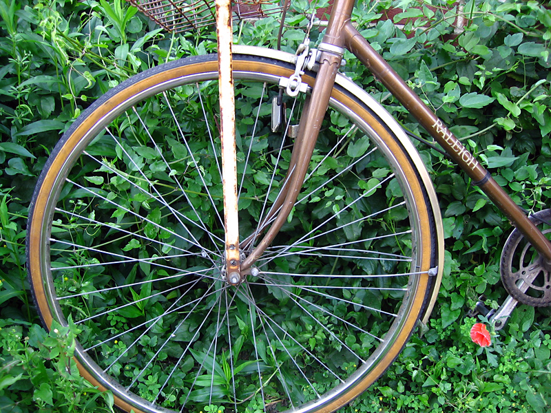 bike tire and plant leaves author ilnyckyj milan