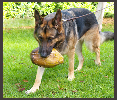 morgen found a coconut and carries it home author siegel honolulu gerry