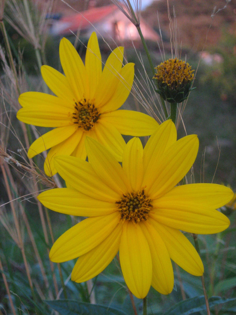 flowers in the field author tadic maria