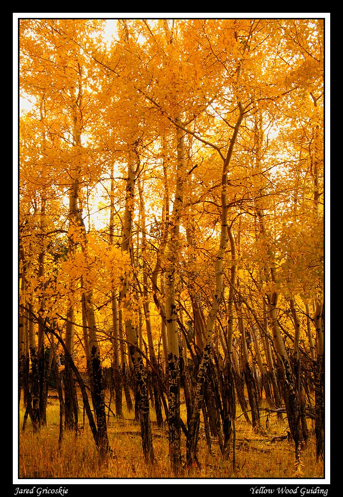fall aspen author gricoskie jared