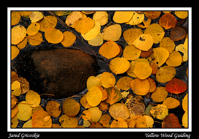 aspen puddle author gricoskie jared