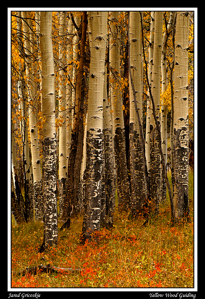 aspen trunks author gricoskie jared
