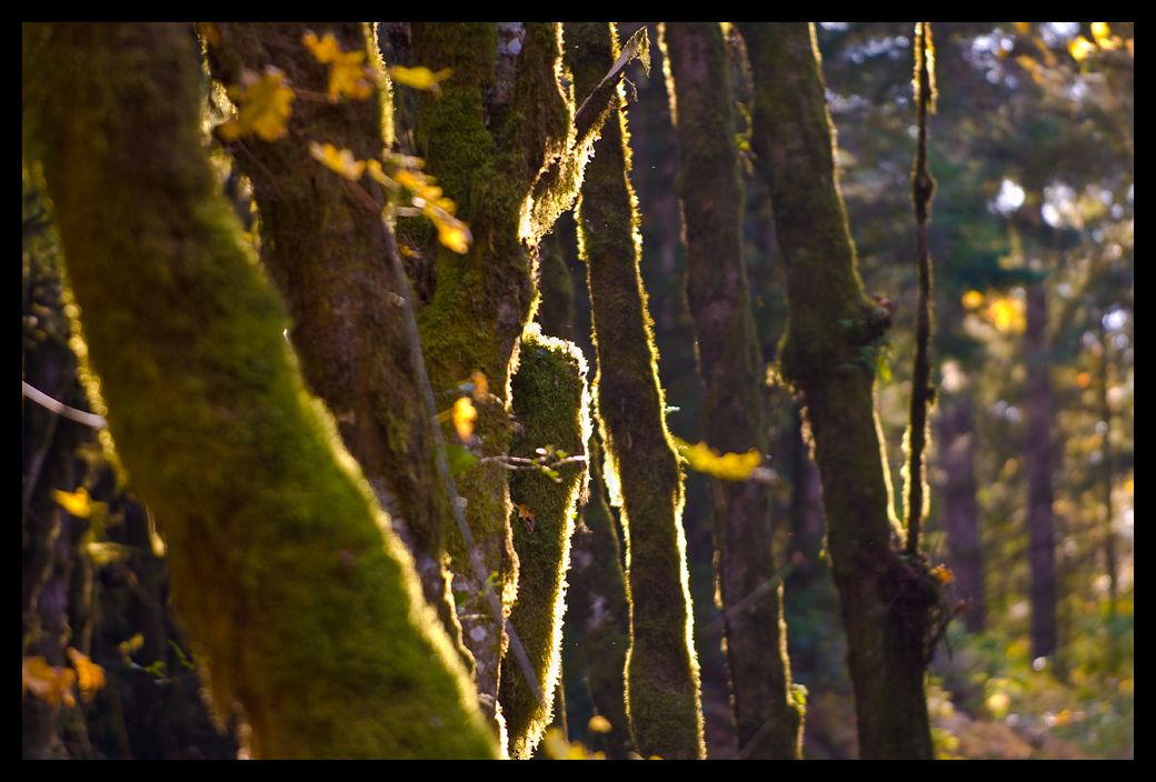 forgotten trees to loggers fall light and colors b dube dave