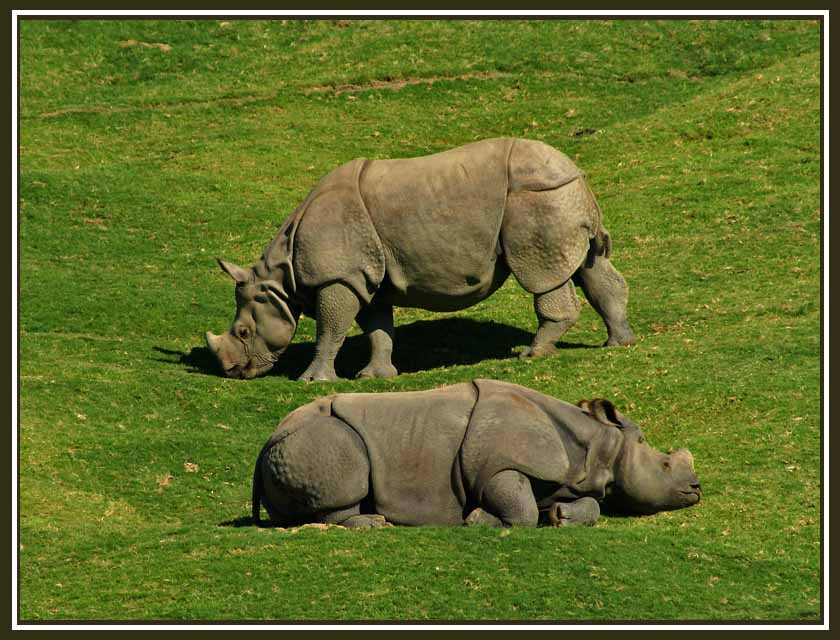 indian rhino couple author downs jim
