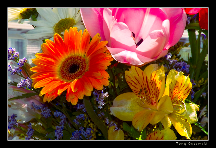 colorful flowers author gutowski anthony