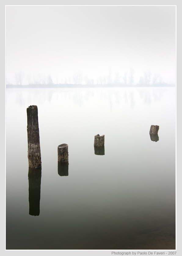 mist stumps and trees with reflections author de faveri paolo