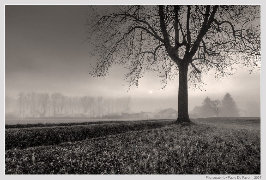 mist in the country author de faveri paolo