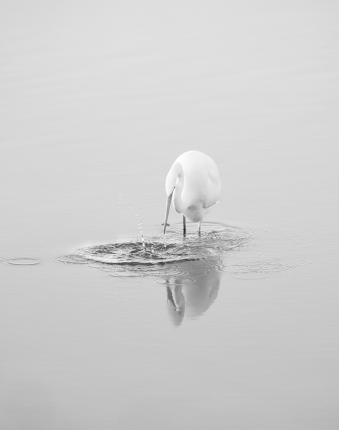 dinner egret style author crosley john