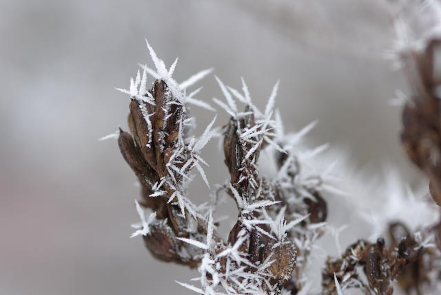 frost spikes author brooks david