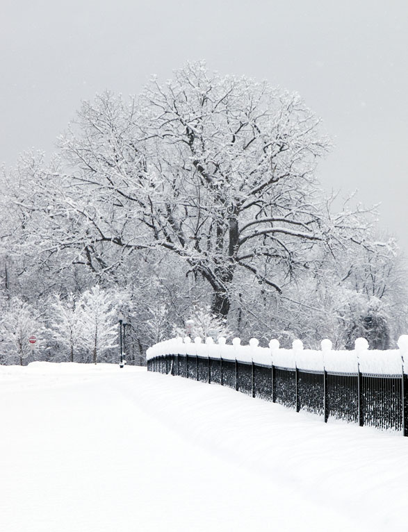 fence along hudson in snow author hull ray