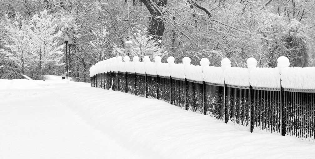 fenceline in snow author hull ray