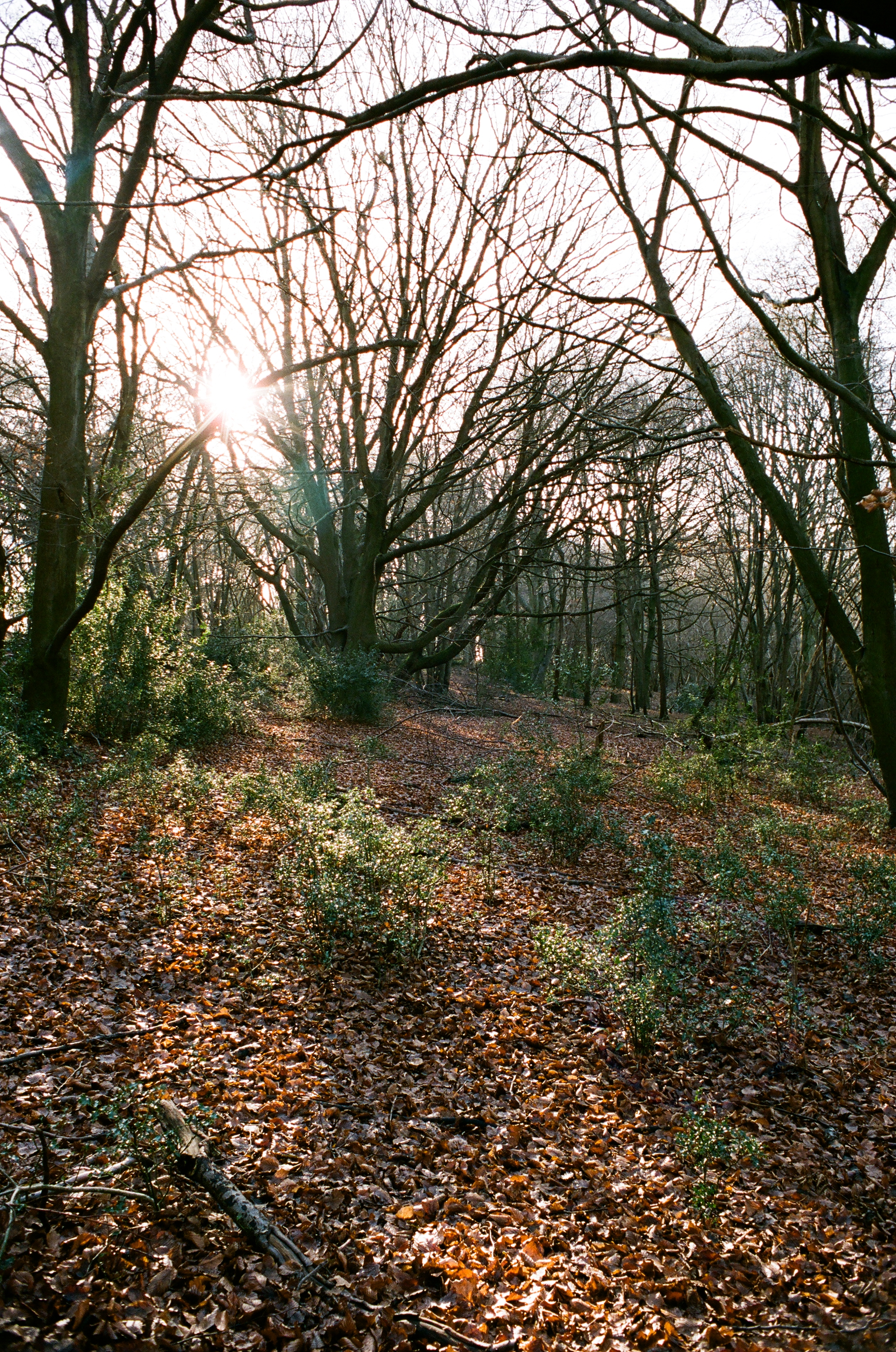 woodland at potten end uk author rance ian