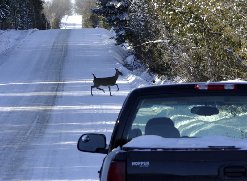 deer on road author brooks david