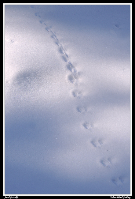 mouse tracks author gricoskie jared