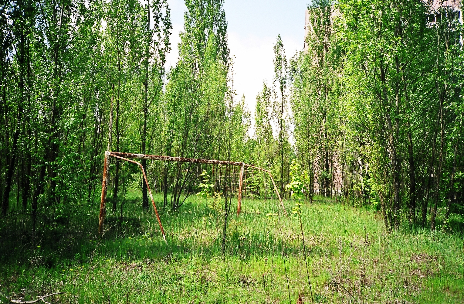 this was the football pitch forest now rance ian