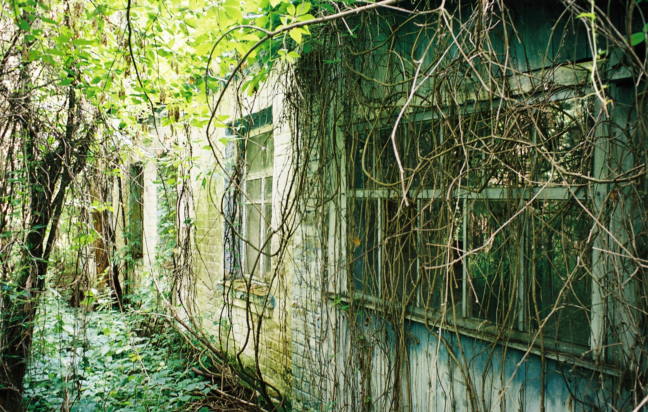 country cottages are lost under lush vegetation so rance ian
