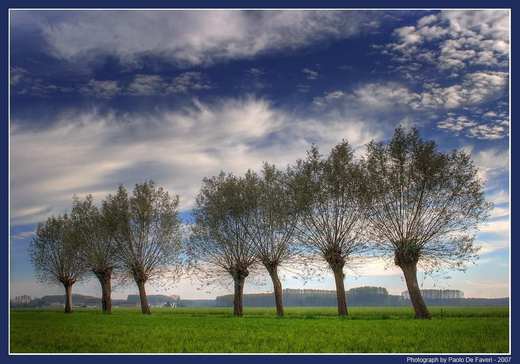 willows and clouds author de faveri paolo