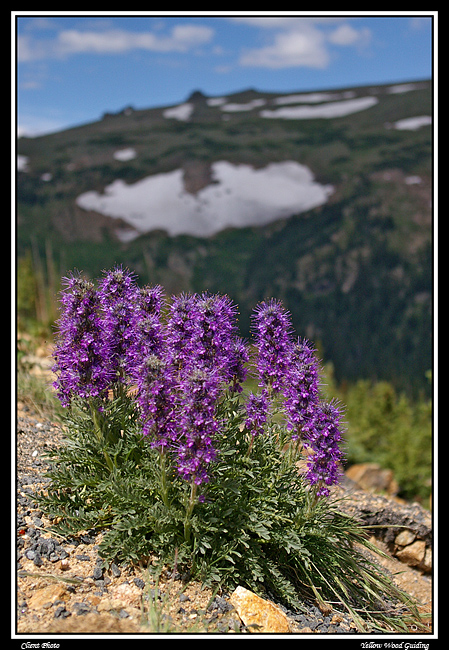 purple fringe on trail ridge author gricoskie jar jared