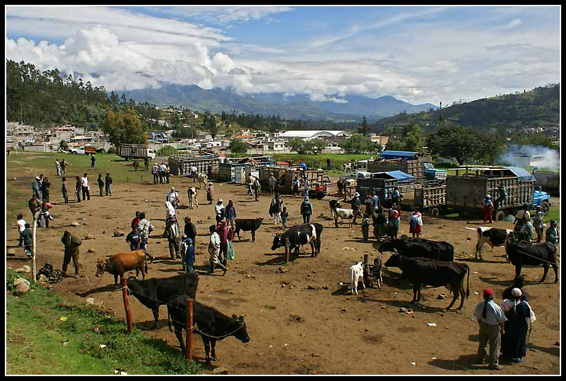cow traders in the ecuadorian andes author downs jim