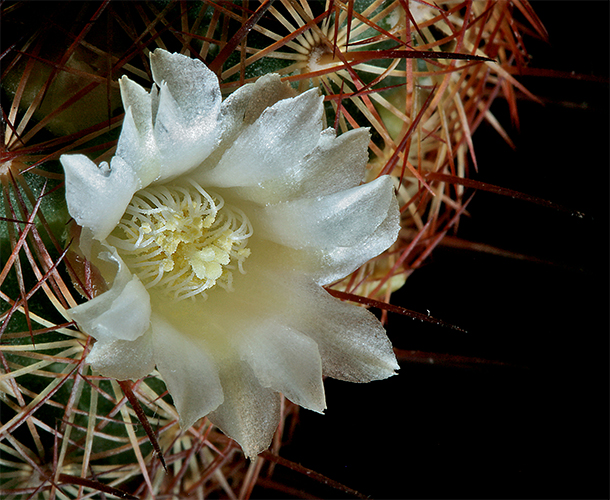 cactur bloom author sava gregory and verena