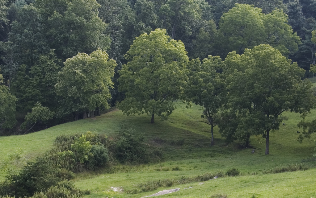 brushy mountains trees and pasture author kelly l landrum