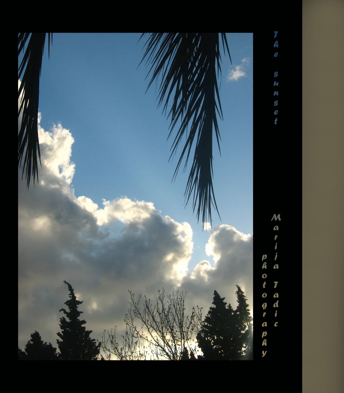 palm leaves and clouds author tadic maria