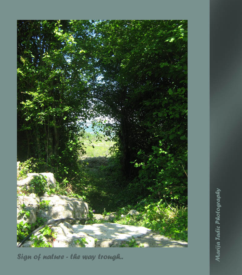 signs of nature the way trough author tadic mar maria