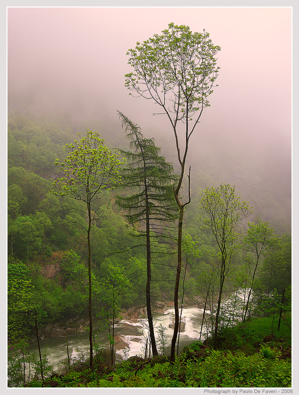 a rain forest in italy author de faveri paolo