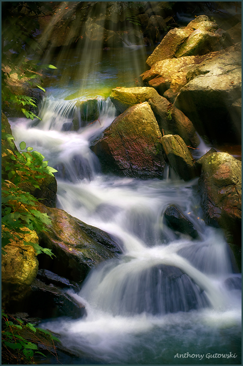 light fall water author gutowski anthony