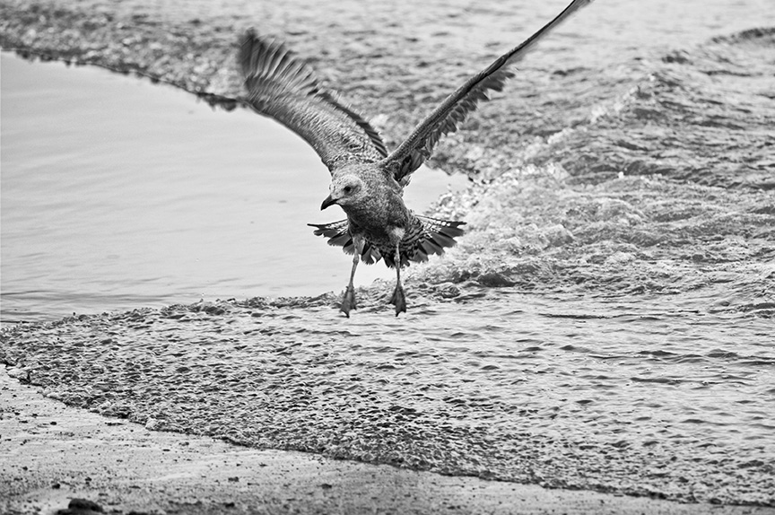 composition with bird and speedy tidal bore autho crosley john