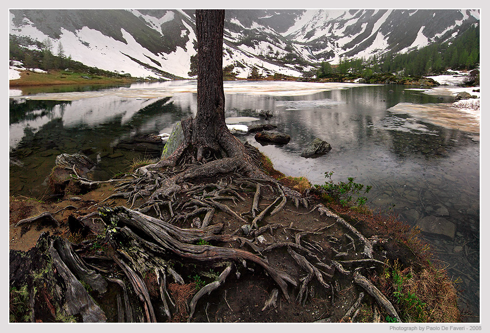 ice rain and roots to be seen larger please autho de faveri paolo
