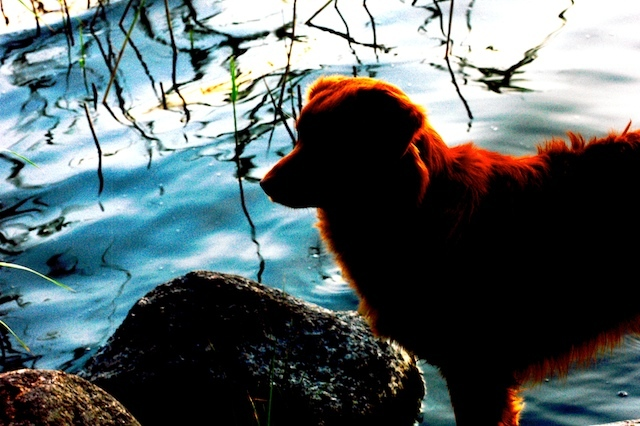 dog by the lake after sunset author soini hannu