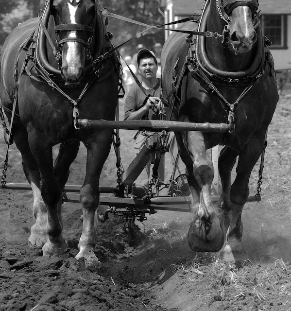 two team plowing author brooks david
