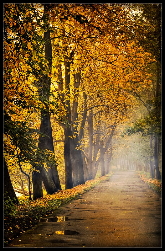 nature gold author mikhaylov andrey