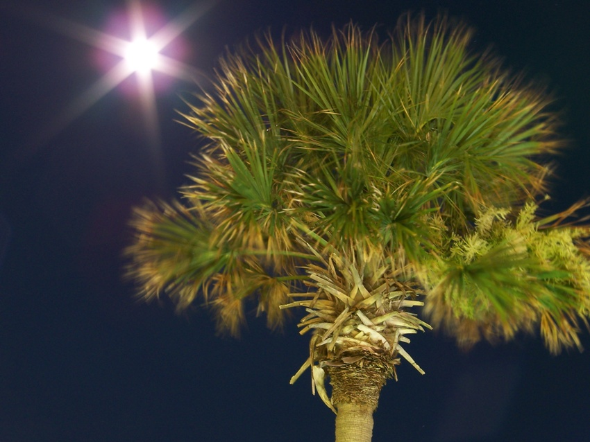 palm with moon author spalding daniel