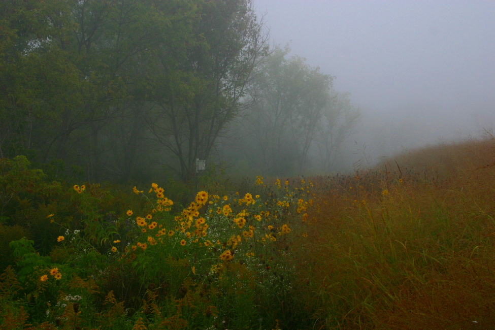 foggy morning author ackerson pat