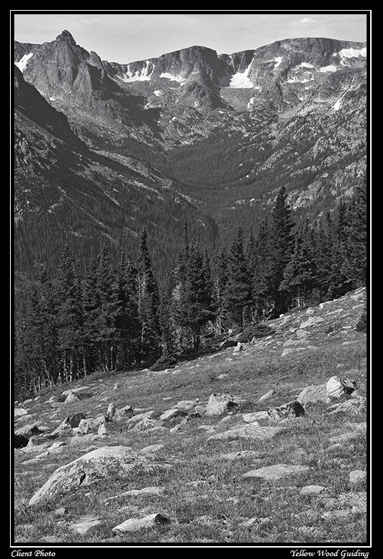 forest canyon black and white author gricoskie ja jared
