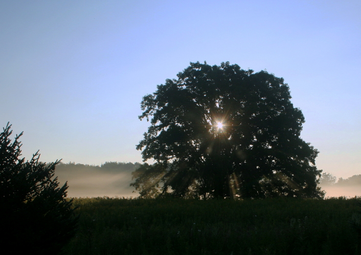 sunrise thru the burr oak author ackerson pat