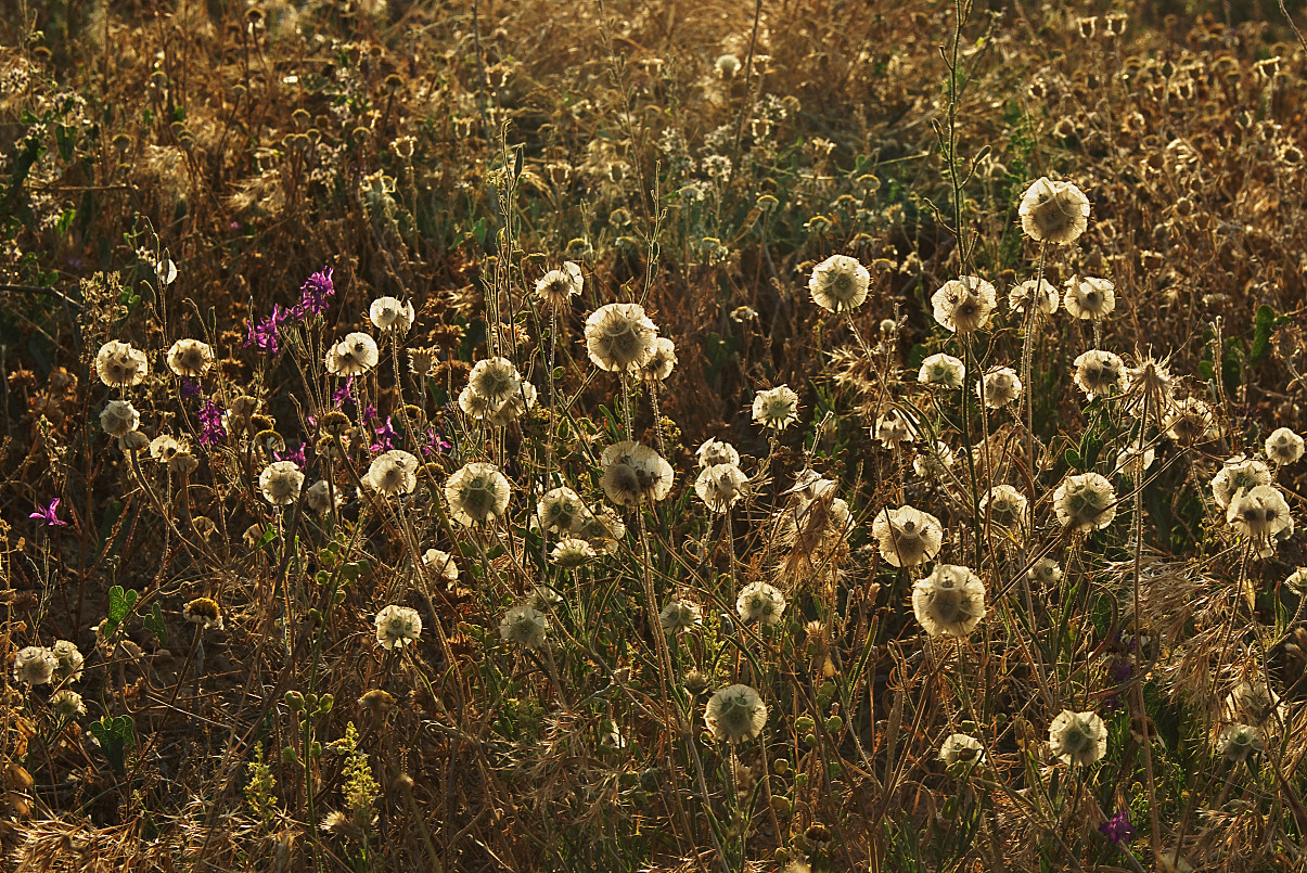 the fields at mid summer author celasun bulent