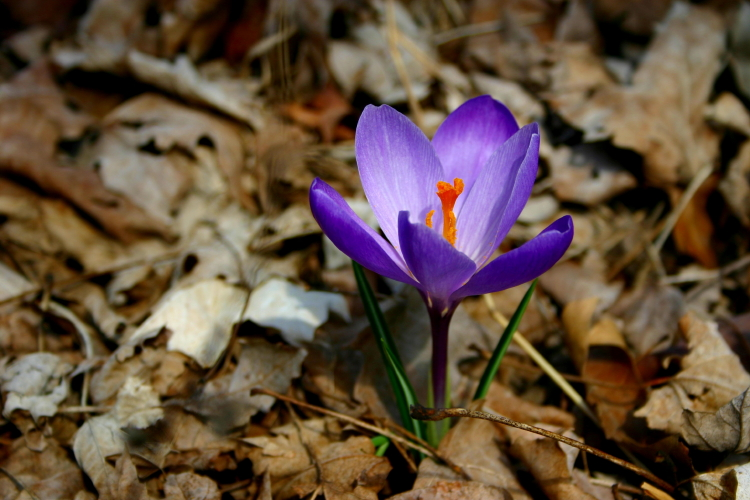 spring flower and fall leaves author ackerson pat