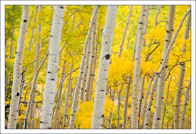 a windy day in the la sal mountains whirls aspen f edge bret